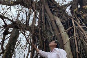 Hàng chục ngàn cây xanh trên đảo Lý Sơn bị bão 'vặt' trụi lá