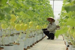 Giải pháp ONE Farm nhận giải thưởng Thành phố Thông minh Việt Nam 2020