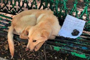 Chú chó bị bỏ rơi ở ghế công viên kèm mảnh giấy với những nét chữ nguệch ngoạc gây xúc động