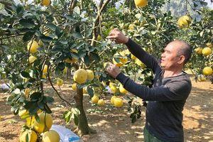 Quản lý từ gốc chất lượng nông sản