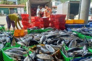 Kiên quyết không để tàu cá vi phạm vùng biển nước ngoài