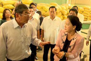 Chủ tịch Quốc hội Nguyễn Thị Kim Ngân thăm cơ sở sản xuất giống lúa ST25