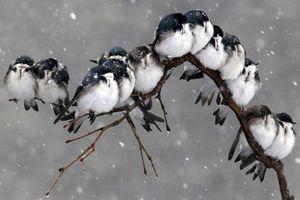 CLIP: Giải mã những bí ẩn thú vị về giấc ngủ của loài chim