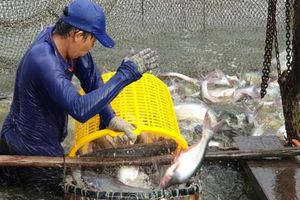 Chú trọng liên kết nuôi trồng thủy sản bảo đảm an toàn thực phẩm