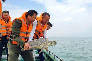 Thả cá thể vích quý hiếm nặng 18kg về biển