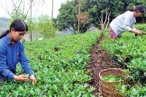 Lạng Sơn tái cơ cấu nông nghiệp gắn với xây dựng nông thôn mới