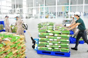 Giải mã 'ôsin của nền kinh tế' Việt còn yếu
