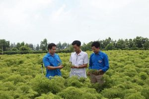 Cải thiện toàn diện kỹ năng nghề nông nghiệp
