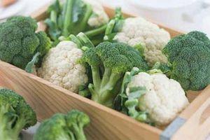 Loại rau được trồng nhiều vào mùa đông, rất bổ dưỡng giúp chống lại bệnh nguy hiểm