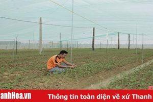 Tích tụ đất đai, chuyển đổi cây trồng