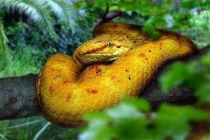 Đảo rắn - nơi kinh hoàng nhất thế giới