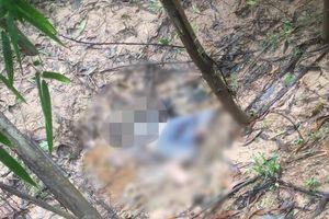 Phát hiện thi thể đang phân hủy trong rừng tràm