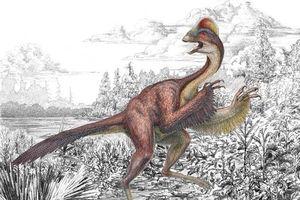 Tìm thấy loài khủng long mới có mào như gà