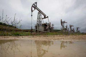 Giá xăng, dầu (28/11): Tăng trở lại