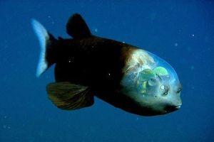 Cận cảnh các 'quái vật biển' dị thường nhất thế giới