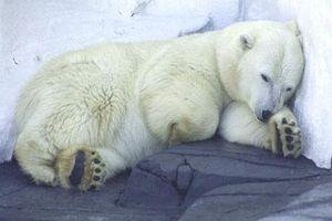 CLIP: Những bí ẩn về giấc ngủ của động vật