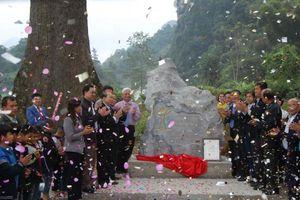 Cao Bằng: Công nhận cây Gạo trên 500 năm là Cây Di sản Việt Nam