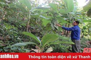 Thanh niên miền núi đam mê trồng rừng, góp phần phòng chống thiên tai
