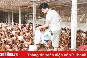 Huyện Triệu Sơn: Phát triển kinh tế - xã hội ở các xã miền núi