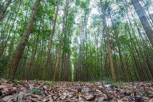 Đóng cửa rừng tự nhiên để đảm bảo phát triển bền vũng