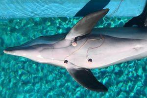 Phát hiện thú vị về cá heo khi lặn