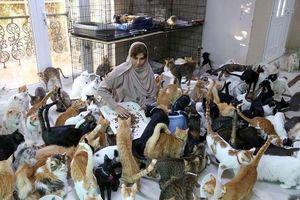 Người phụ nữ chi khoảng 8.000 USD/tháng nuôi gần 500 con mèo
