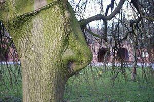 Cận cảnh những cây cổ thụ có hình thù kỳ quái khiến ai xem cũng giật mình thon thót