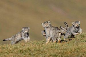 Loạt bức ảnh về cuộc sống hoang dã ấn tượng nhất 2020
