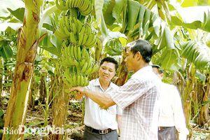 Đảng bộ huyện Thống Nhất: Nỗ lực thực hiện nhiệm vụ chính trị địa phương