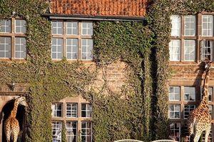 Những khách sạn đẹp và 'dị' nhất thế giới