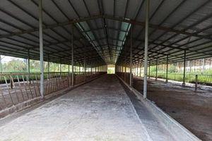 Vì sao dự án nuôi bò 2.600 tỉ đồng lại chuyển sang dự án nuôi heo 254 tỉ đồng?
