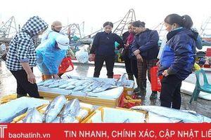 Hà Tĩnh phấn đấu khai thác 16.400 tấn hải sản vụ cá Bắc