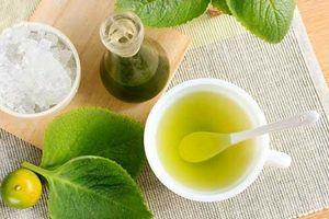 Cây húng chanh và công dụng điều trị các bệnh về đường hô hấp