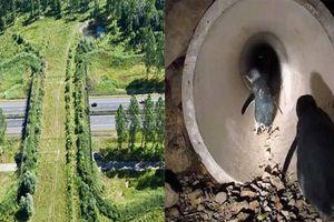 Độc đáo những công trình giao thông dành riêng cho động vật