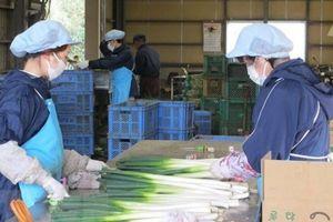 Nhật cho phép những người nước ngoài bị mắc kẹt được đi làm để có thu nhập