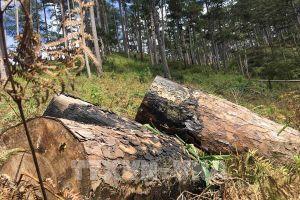 Thủ tướng chỉ đạo kiểm tra, xử lý thông tin về phá rừng tại Lâm Đồng