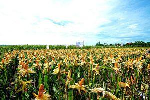 29 quốc gia đã canh tác cây trồng sinh học