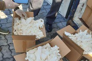 Hải quan bắt 2 container găng tay đã qua sử dụng nhập khẩu từ Trung Quốc