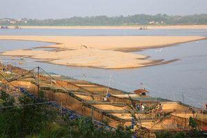 Sông Đà cạn trơ đáy, nông dân hối hả bơm cát cứu cá