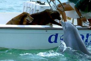 Bất ngờ xuất hiện từ dưới lòng đại dương, hành động của chú cá heo khiến tất cả mọi người phải ngỡ ngàng