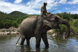 Con voi cuối cùng ở Bắc Tây Nguyên chết bên bờ suối