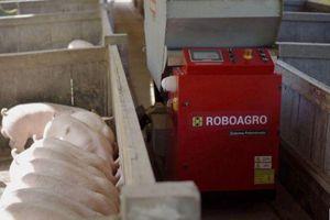 Robot cho lợn ăn đắt hàng mùa COVID-19