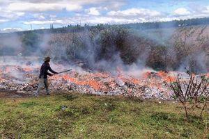 Gia Lai: Tiêu hủy hàng trăm nghìn bao thuốc lá lậu các loại
