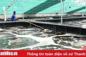 Thị xã Nghi Sơn phát triển kinh tế biển theo hướng bền vững