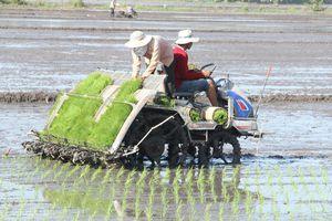 Cơ hội đánh bóng thương hiệu hạt gạo miền Tây