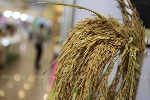 Thái Lan giành giải thưởng Gạo Ngon nhất thế giới năm 2020