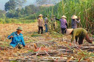 Bảo vệ lợi ích chính đáng của ngành mía đường