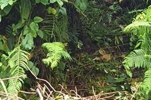 Quảng Nam: Thi thể trong rừng chết do siết cổ, ngạt khí
