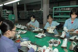 Đảm bảo tiêu chí chất lượng sản phẩm đối với hàng hóa xuất khẩu sang Hà Lan