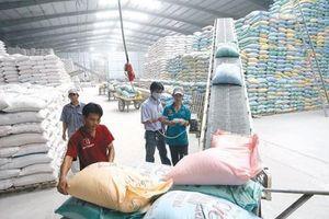 Chất lượng được cải thiện, Gạo Việt Nam đang được thu mua với giá cao